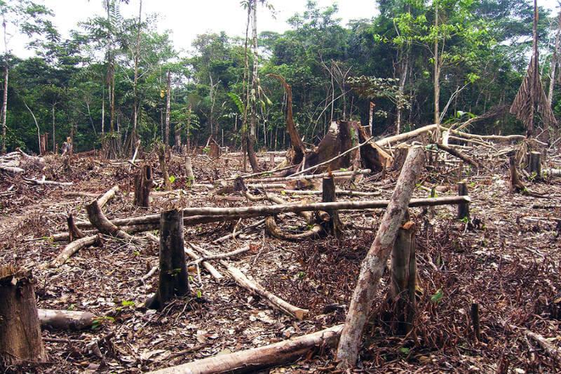 Prohíben deforestación Noruega