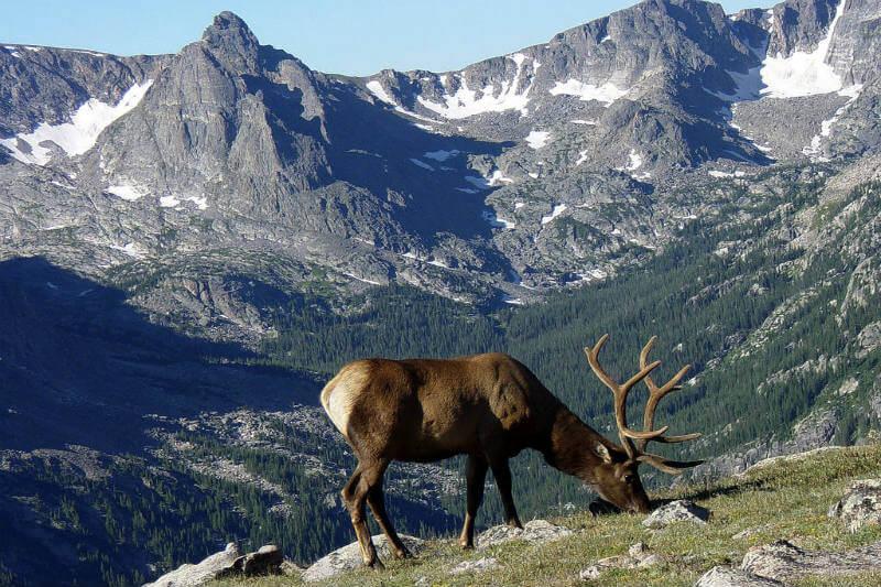 Protección fauna Estados Unidos
