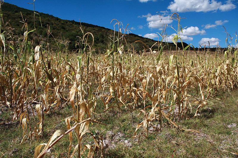 Sequía en Sinaloa SEGOB