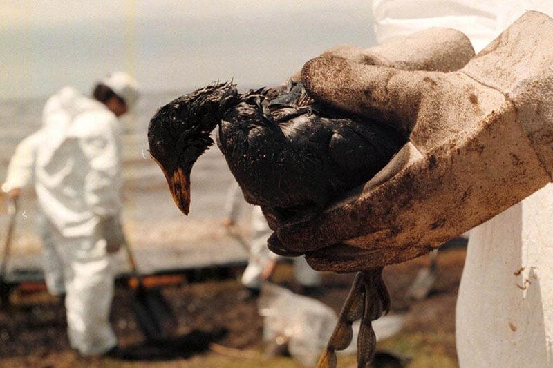 Amenazas aves WWF