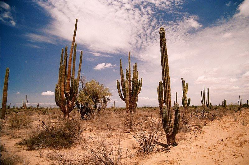 Desierto Sonora UNAM