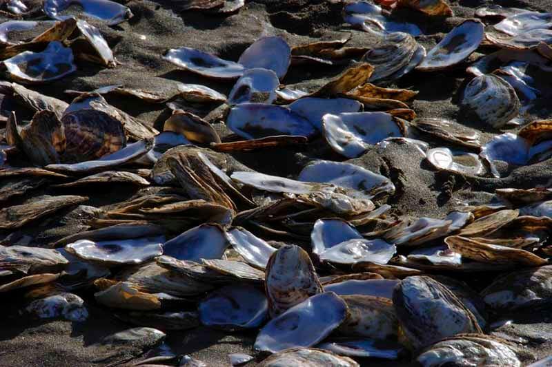 Moluscos ecosistema marino