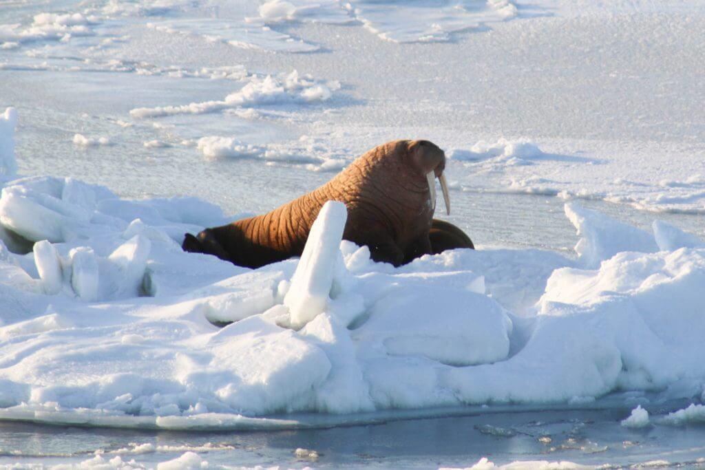 Ártico temperatura