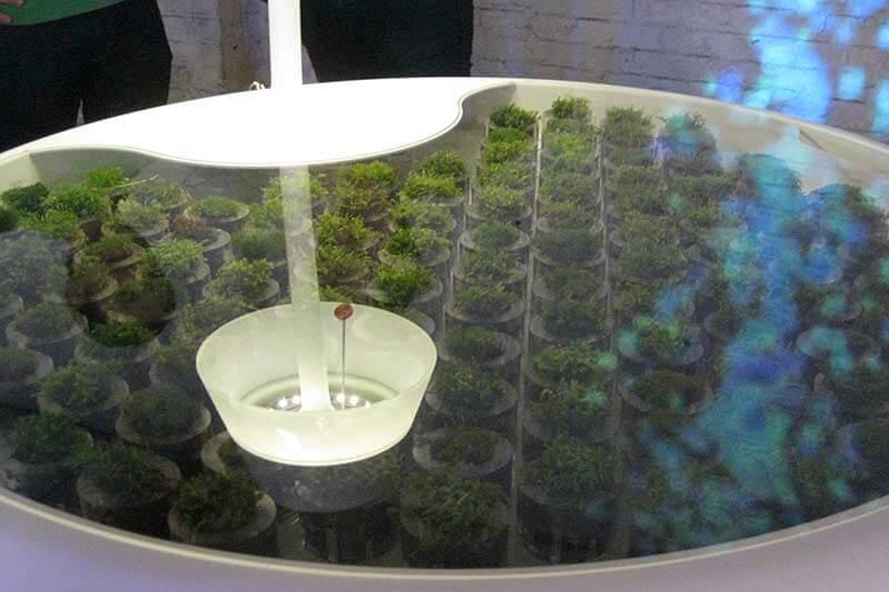 Moss biophotovoltaics