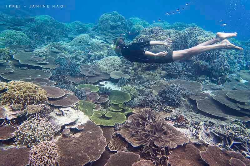 Arrecife de coral Japón