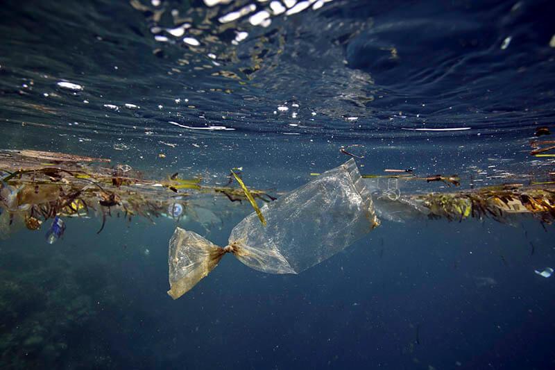 Ártico basura marina
