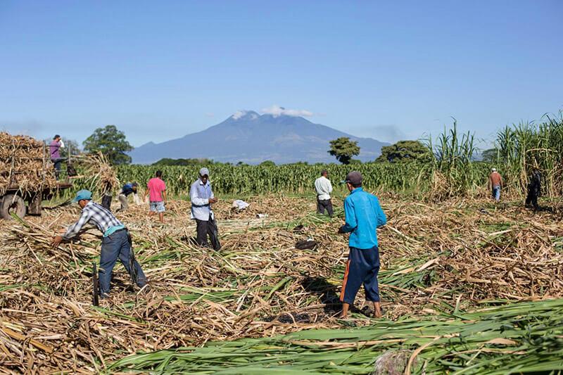El Salvador agricultura
