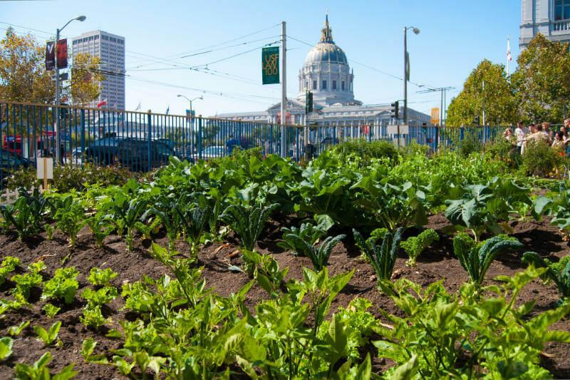 Granjas urbanas producción alimentos revolucionaria