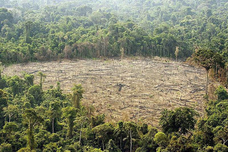 Los ex combatientes de las FARC son reasignados para reforestar los bosques de Colombia