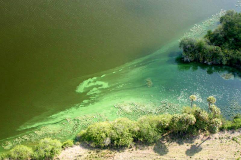 """Al aumentar la temperatura, """"zonas muertas"""" se generan en lo profundo de los lagos, alterando el ecosistema de varias especies."""