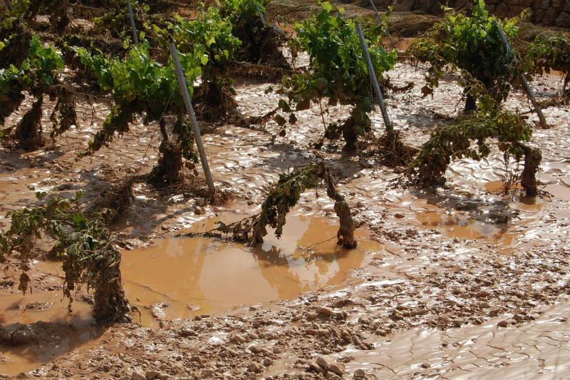 Según la Oficina Meteorológica, un pérdida simultánea de cultivos en regiones importantes podría generar un hambruna global.