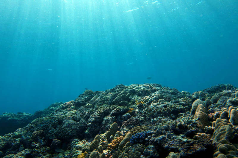 Si las zonas con bajo contenido de oxígeno en el océano se expanden, las redes alimentarias marinas pueden colapsar.