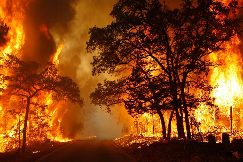A medida que las temperaturas aumentan, existe un mayor riesgo de incendios forestales durante todo el año.