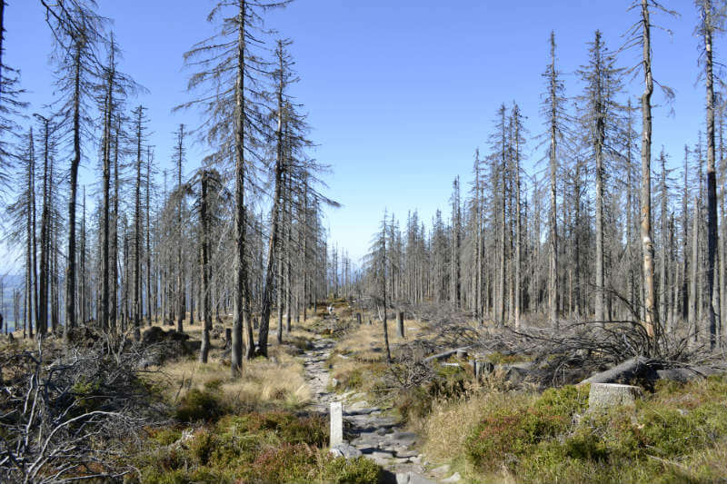 La investigación sobre cómo la sequía mata a los árboles ayudará a priorizar áreas de manejo y dar soluciones para prevenir el problema.