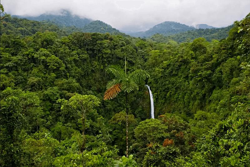 La importancia de Latinoamérica para el planeta por su biodiversidad.