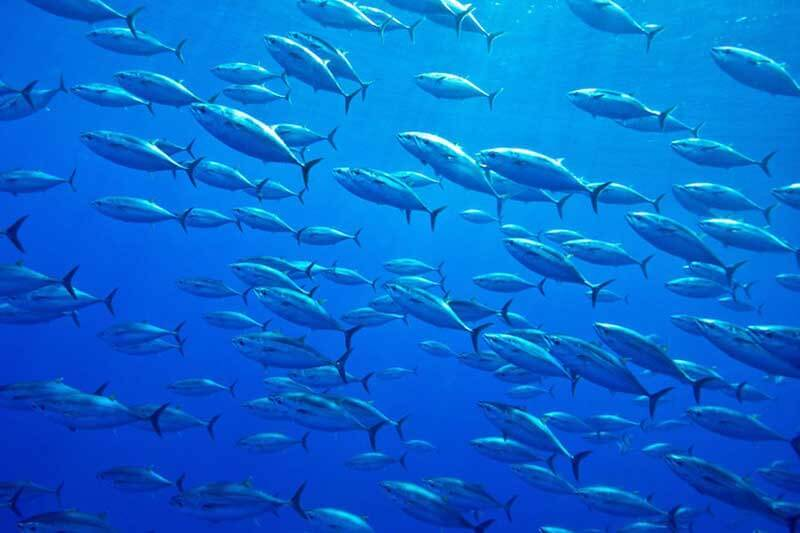 Un estudio sugiere que con el calentamiento de la Tierra se reducirá el tamaño de los peces.