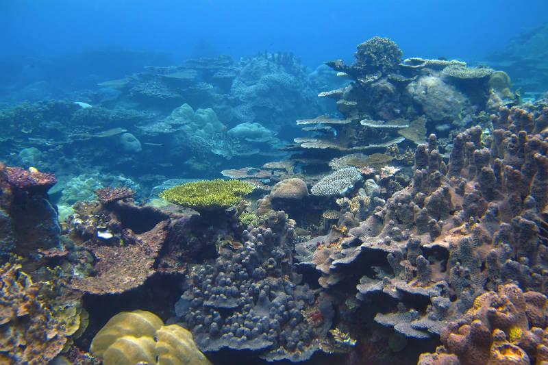 El proyecto 100 Island Challenge utiliza la fotografía tridimensional para monitorear cambios en los arrecifes con el fin de protegerlos.