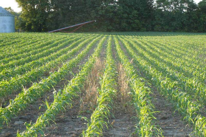 Estudio reexamina los beneficios de las prácticas de cultivo que mantienen las raíces en el suelo durante todo el año.