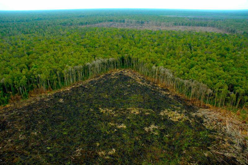 Según la WWF, para el 2050, se necesitarán al menos tres planetas para abastecer a toda la población.