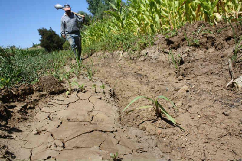 Delegados de 16 países de Latinoamérica y el Caribe desarrollarán estrategias de prevención, evaluación y mitigación de la sequía.
