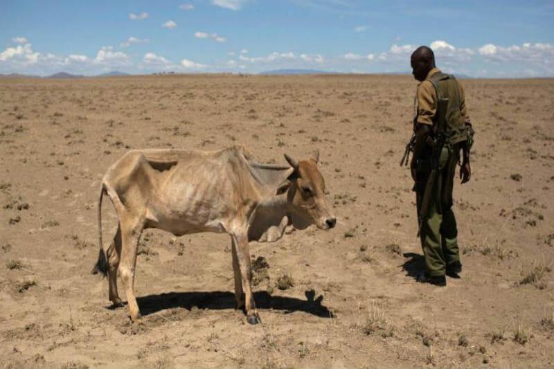 El condado de West Pokot parece más un paisaje de Marte, la tierra seca complica la cosecha y que el ganado sobreviva.