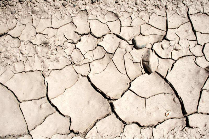 Una recuperación incompleta de la sequía conducirá posiblemente a la muerte de árboles y aumento de emisiones de gases de efecto invernadero.