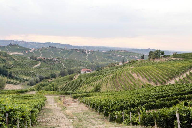 Vinicultores en Italia comentan que las olas de calor y las lluvias esporádicas afectan las cosechas.