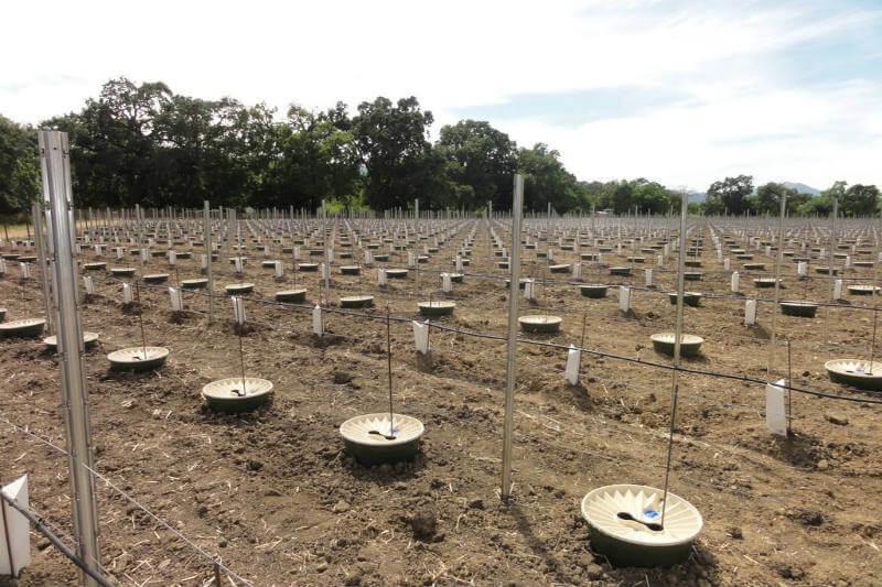 Los árboles plantados con Waterboxx han conseguido un ratio de supervivencia de entre el 80% y el 90%.