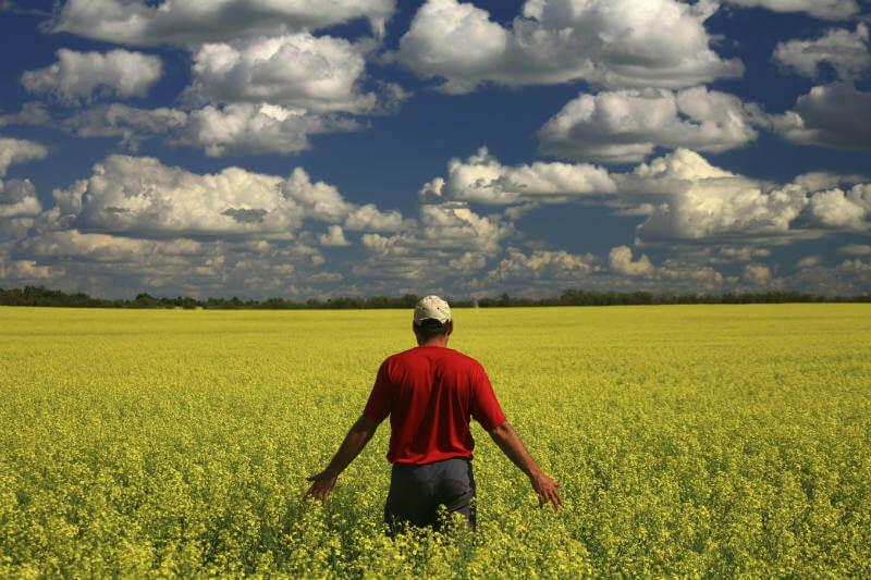 Gracias al cambio climático, millones de hectáreas podrían transformarse en tierras de cultivo, aumentando la producción agrícola del país.