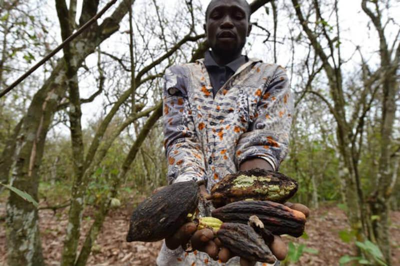 La agrobiodiversidad, una valiosa fuente de alimentos nutritivos y asequibles, podría desaparecer si no se actúa a tiempo.