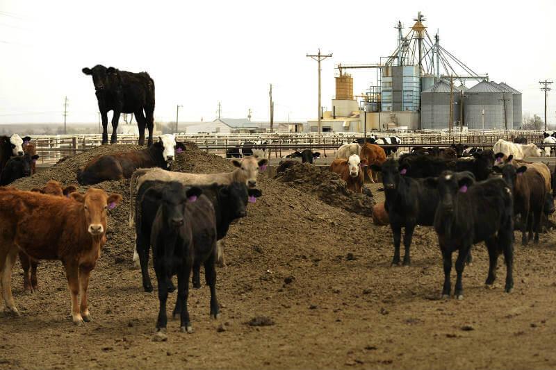 Nuevo plan de subsidios y programas de reciclaje para los granjeros les permitirá convertir los residuos de animales en fertilizantes.