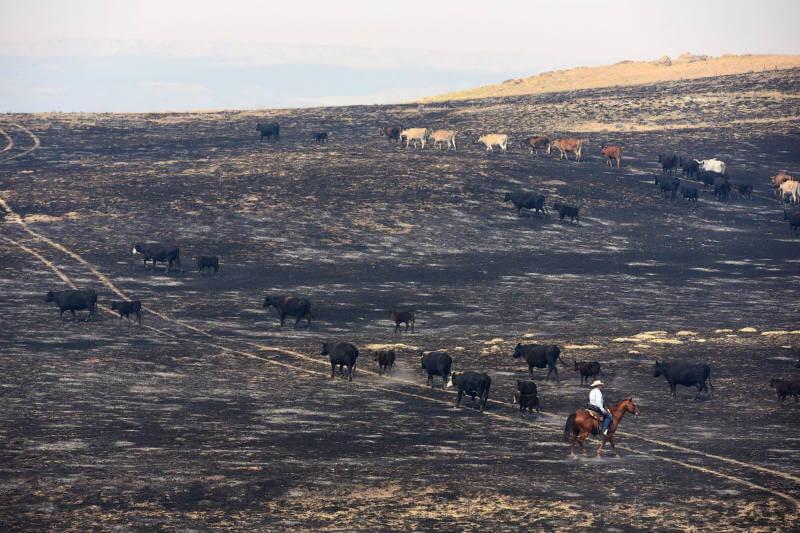 Cultivos y ganado en el estado se vieron afectados por la falta de lluvia, agricultores aseguran que ha sido una de las peores sequías.