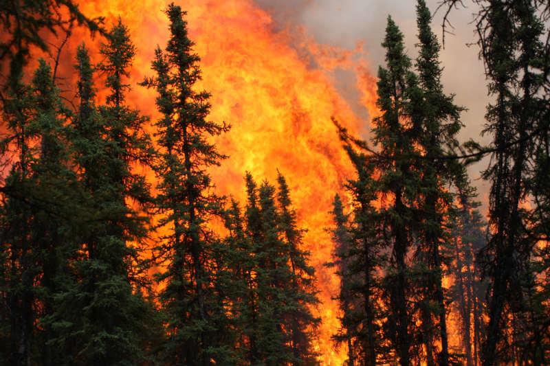 El autor Ed Struzik advierte que el aumento de los incendios tendrá un fuerte impacto en los pueblos y vida silvestre del Norte.