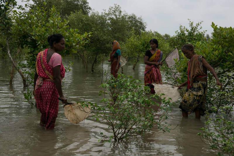 Mujeres en India arriesgan su vida pescando en aguas peligrosas porque ya no pueden cosechar en sus tierras infértiles.