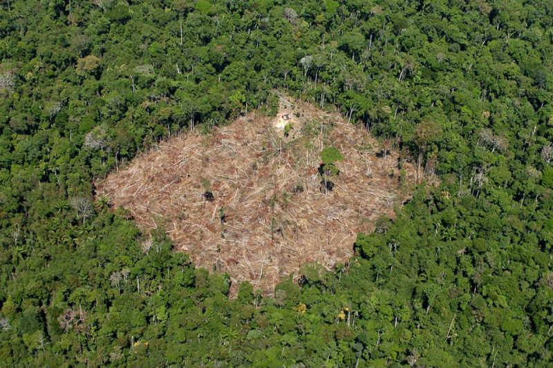 Según un estudio, cerca del 90 % de la deforestación se ha registrado fuera de los espacios mineros habilitados por el Gobierno de Brasil.
