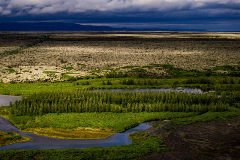Islandia perdió la mayoría de sus árboles hace mucho tiempo. A pesar de años de reforestación, no se está progresando mucho.