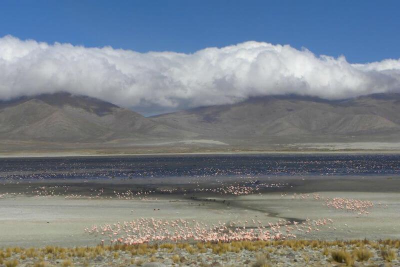Según datos registrados por guardaparques del área protegida, la laguna ya experimentó esta situación en 1975, en 1995 y la última vez en 2005.
