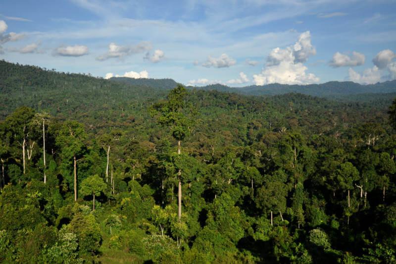 Según un estudio, las pérdidas de carbono causadas por la deforestación y la degradación forestal superan las ganancias en todos los continentes.