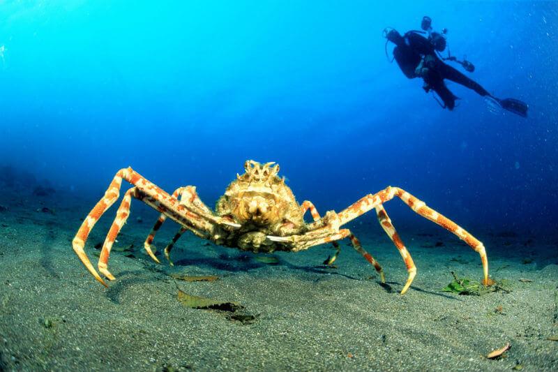 Expertos investigan los efectos de una disminución del pH en los ecosistemas marinos a causa de la acidificación.