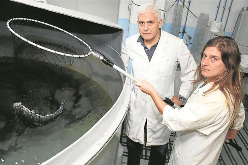Estudio muestra que el aumento de temperatura podría contribuir a anomalías anatómicas y de fertilidad, especialmente en los peces.