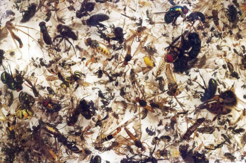 En 25 años, tres cuartos de los insectos voladores en las reservas naturales de Alemania han desaparecido, lo cual no es bueno para la vida en la Tierra.