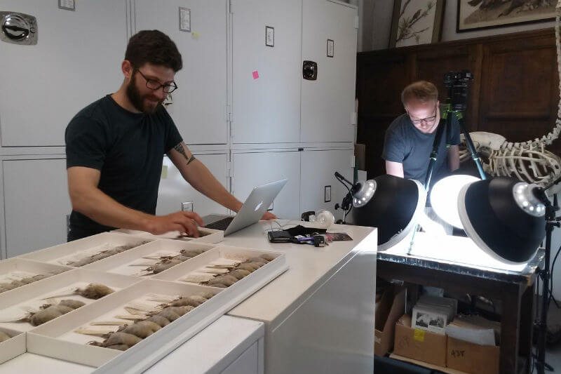 Investigadores examinaron aves en varios museos de Estados Unidos para determinar la cantidad de hollín en la atmósfera durante el siglo 20.