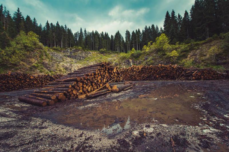 Según estimaciones del Global Forest Watch, la pérdida de áreas forestales en todo el mundo alcanzó en 2016 un nivel récord de 29,7 millones de hectáreas.
