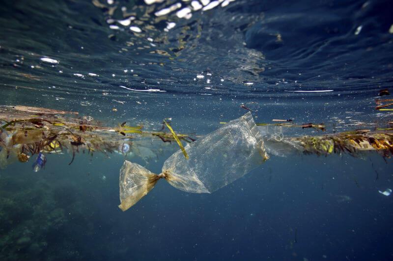Estudio muestra que el consumo de nanoplásticos podrían estar perturbando ecosistemas oceánicos, alterando la habilidad de caza de los peces que los absorben.