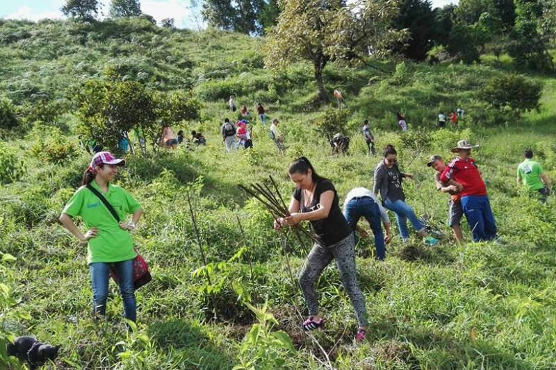 La fundación tiene como propósito darle una nueva vida al río Quindío, en Colombia, al sembrar miles y miles de árboles a su alrededor.