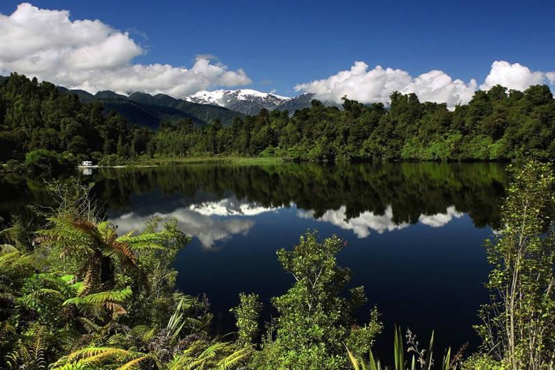 Jacinda Ardern tiene políticas medio ambientales ambiciosas, ya que planea duplicar la cantidad de árboles que el país planta cada año.