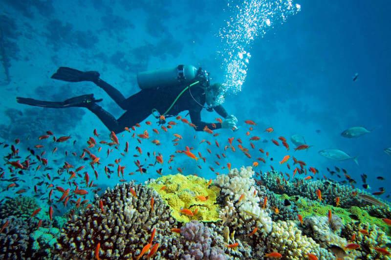 Datos recolectados por 250 buzos han proporcionado a científicos nuevos conocimientos sobre cómo el aumento de la temperatura está afectando los océanos.