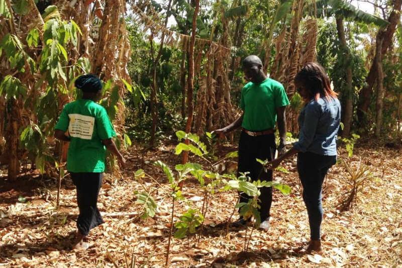 """""""Las plantas están desapareciendo, las frutas y las hierbas medicinales, pero no podemos hacer nada"""", Albert Mutasa."""