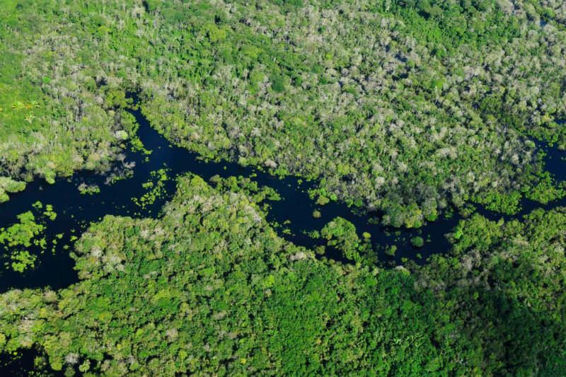 Alemania y Gran Bretaña proporcionarán un total de $ 153 millones para ampliar los programas de lucha contra el cambio climático y la deforestación en la selva amazónica.