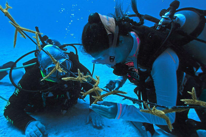 La organización invita a buceadores a que participen en la conservación y restauración de arrecifes de coral en Colombia y otras islas del Caribe.